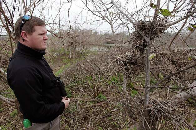 Marc Reid, Houston Audubon coastal sanctuaries manager, examines nests from the previous nesting season at the Smith Oaks Sanctuary. The drought has damaged the rookery, but he is hopeful birds will return. Photo: Brett Coomer / © 2012 Houston Chronicle