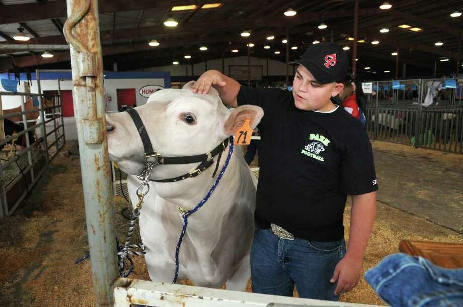 """Nolan Stokley, 15, a freshman at Kingwood Park High School and a member of the Kingwood Park FFA, tends to """"Bo,"""" his sister Brendy's Charollaix steer, during the Humble ISD Livestock Show at the Humble Civic Center Arena. Brendy is a junior at KPHS. Photo: Jerry Baker"""