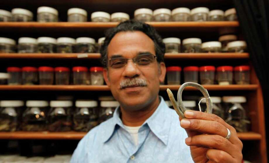 In this Monday, Feb. 20, 2012 photo, Delhi professor Sathyabhama Das Biju displays an adult chikilidae in his laboratory in New Delhi, India. Biju and his team of biologists have identified an entirely new family of amphibians, called chikilidae, endemic to the region but with ancient links to Africa. Their discovery, published Wednesday, Feb. 22, 2012, in a journal of the Royal Society of London, gives yet more evidence that India is a hotbed of amphibian life with habitats worth protecting against the country's industry-heavy development agenda. Photo: AP