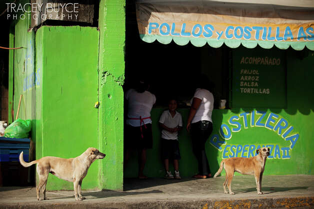 A photo from a series on the strays of Cancun by Saratoga Springs photogapher Tracey Buyce, who volunteered to document a sterilization clinic organized by CANDi (Cats and Dogs International).