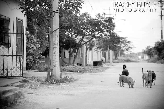 A photo from a series on the strays of Cancun by Saratoga Springs photographer Tracey Buyce, who volunteered to document a sterilization clinic organized by CANDi (Cats and Dogs International).