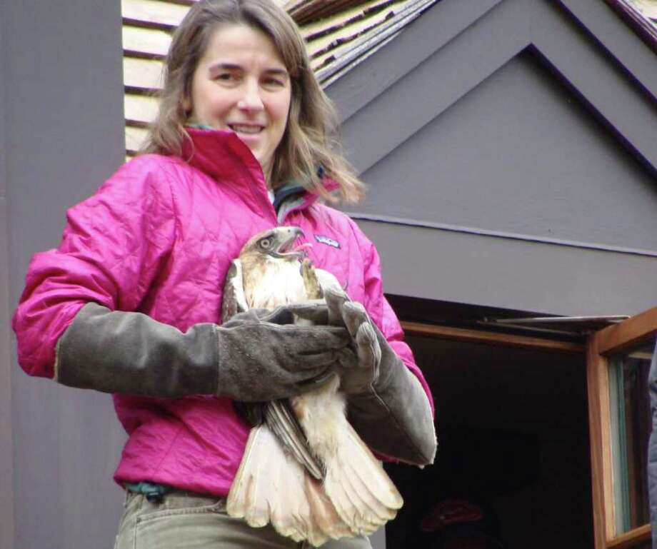 Dara Reid, founder of the Weston-based Wildlife in Crisis, holds a female red-tailed hawk on the balcony of a home off Evergreen Avenue in Westport moments before it was released Saturday after a month-long rehabilitation from a serious injury. Photo: Meg Barone / Westport News freelance