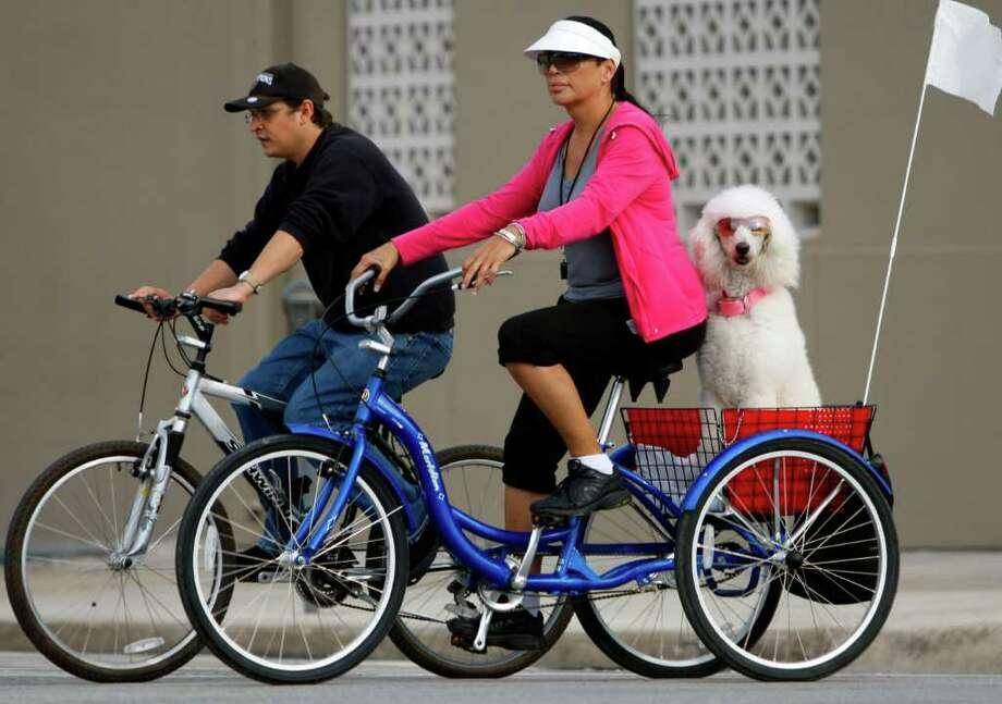 Gina Loera's seven-year-old poodle, Fifi, rides in the back of Loera's three-wheel bicycle Thursday Feb. 23, 2012 as Loera and her friend Jess Ramirez ride down Broadway towards downtown. Loera says when the weather permits she rides almost 5 days a week with Fifi who has been riding with Loera for about two years. Photo: William Luther, San Antonio Express-News / © 2012 SAN ANTONIO EXPRESS-NEWS