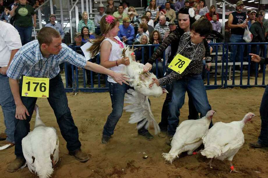 Travis Rooney, 16, of College Station, from left, Kylie Burns, 11, of San Antonio, Jessica Hawkins, 17, of San Antonio, and Parker Thomas, 11, of Marion, try to calm Burns' turkey hen as they wait to have their turkey hens judged. Photo: Lisa Krantz, San Antonio Express-News / @2012 SAN ANTONIO EXPRESS-NEWS