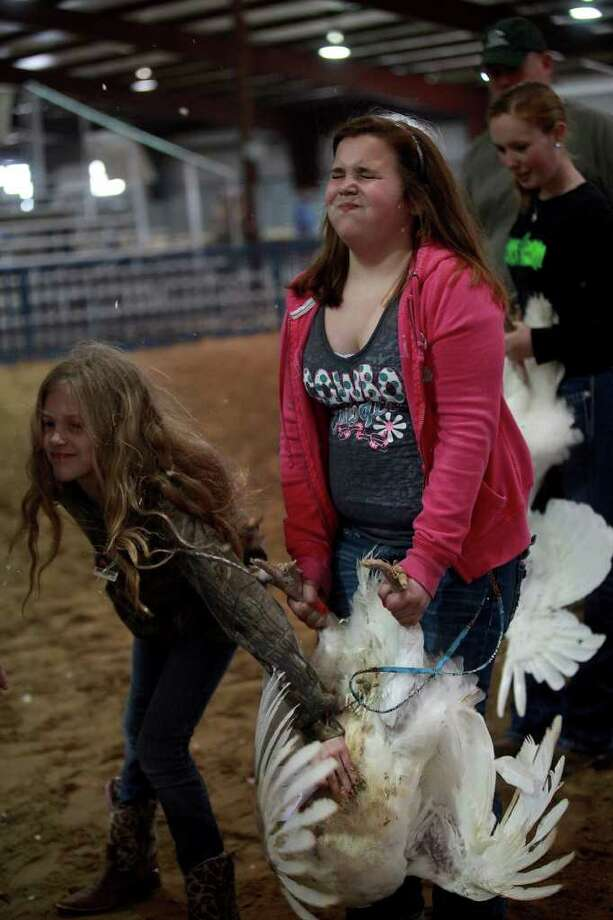Summer Morgenroth, 10 (left), helps calm the turkey hen held by Madison St. John, 11, of Schertz, during the preliminary judging for the Junior Market Turkey Show at the San Antonio Stock Show & Rodeo on Wednesday, Feb. 22, 2012. Photo: Lisa Krantz, San Antonio Express-News / @2012 SAN ANTONIO EXPRESS-NEWS