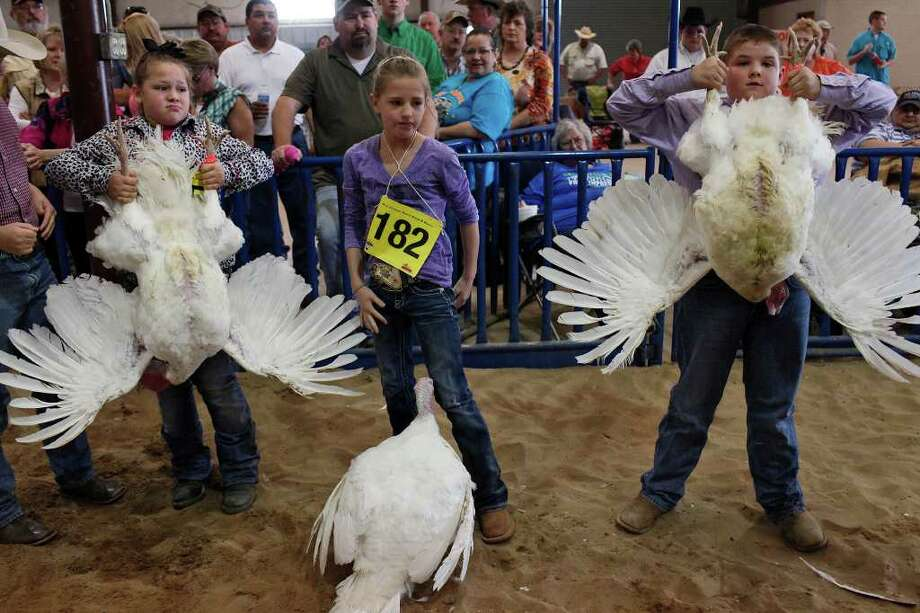 Hailey Cowey, 9, of Pleasanton, Kelly Copeland, 10, of Hutto, and Jared Mendez, 11, of Marion, wait to have their turkey hens judged during the Junior Market Turkey Show at the San Antonio Stock Show & Rodeo on Thursday, Feb. 23, 2012. Photo: Lisa Krantz, San Antonio Express-News / @2012 SAN ANTONIO EXPRESS-NEWS