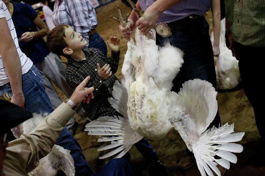 "Lane Ramzinski, 6, watches as Chase Pargmann, 15, holds a turkey hen for his brother, Ty Pargmann, 9, all of LaVernia, during the preliminary judging for the Junior Market Turkey Show at the San Antonio Stock Show & Rodeo on Wednesday, Feb. 22, 2012. ""We're just showing him the ropes for when he gets in third grade,"" Chase Pargmann said of Ramzinski. Photo: Lisa Krantz, San Antonio Express-News / @2012 SAN ANTONIO EXPRESS-NEWS"