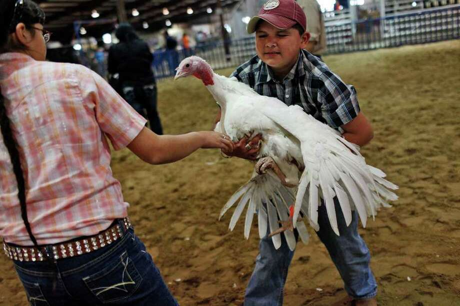 Amanda Aguillera, 10, gets help with her turkey hen from her brother, Brian Aguillera, 12, of Atascosa County, during the preliminary judging for the Junior Market Turkey Show at the San Antonio Stock Show & Rodeo on Wednesday, Feb. 22, 2012. Photo: Lisa Krantz, San Antonio Express-News / @2012 SAN ANTONIO EXPRESS-NEWS