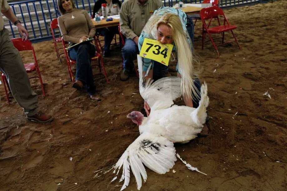 Avery Burkholder, 17, of Helotes, picks up her turkey tom during the preliminary judging for the Junior Market Turkey Show at the San Antonio Stock Show & Rodeo on Wednesday, Feb. 22, 2012. Photo: Lisa Krantz, San Antonio Express-News / @2012 SAN ANTONIO EXPRESS-NEWS