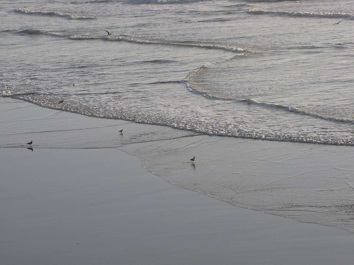 A file photo of Ocean Beach. Its is a 4-mile stretch popular with surfers, picnickers and fishers.
