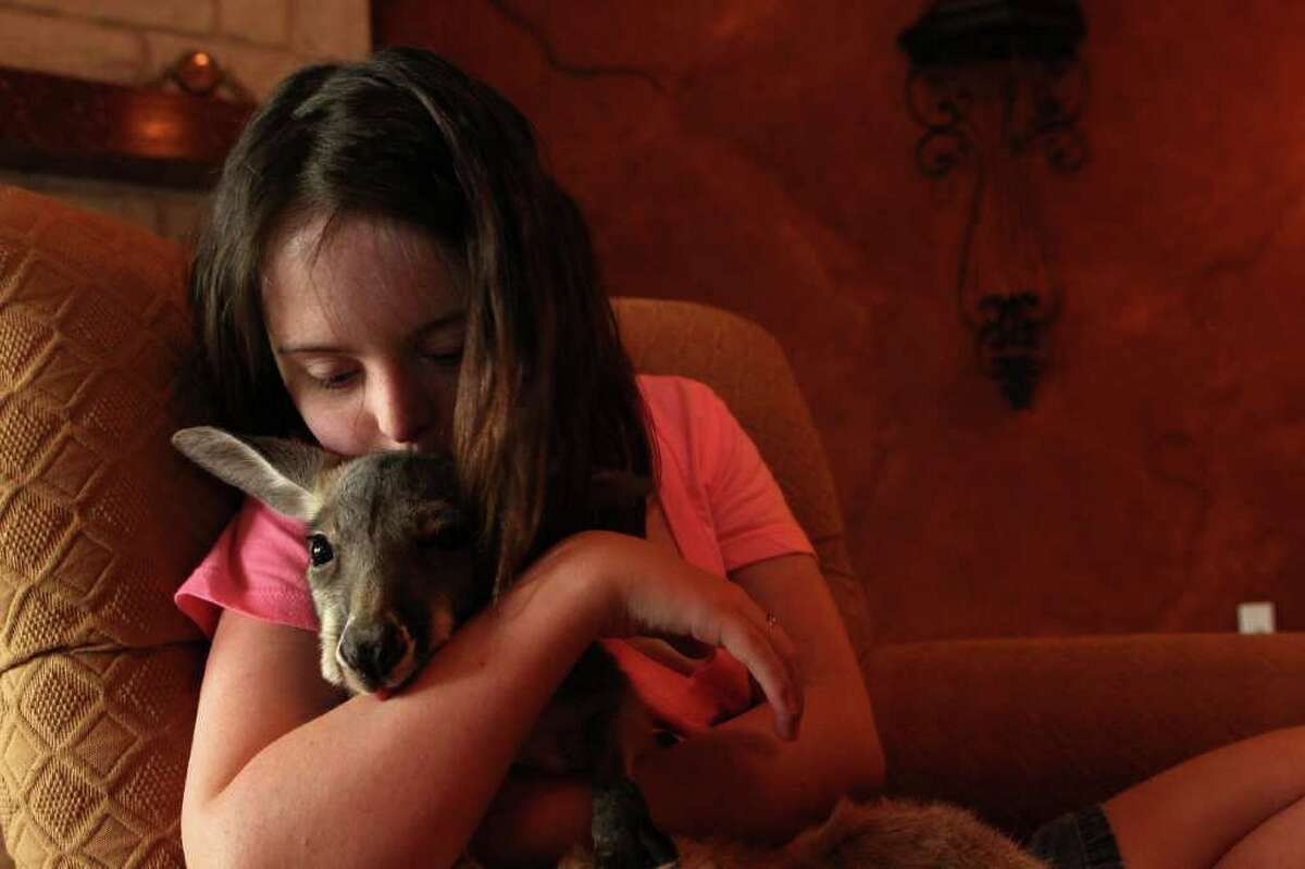 """Kala Dries, 16, who has Down's Syndrome, gives her 6-month out-of-pouch kangaroo named Mike a kiss at her parents home Wednesday, Feb. 29, 2012, in Spring. ( Johnny Hanson / Houston Chronicle ) The Estates of Legends Ranch HOA sent the Dries family a letter saying they are violating the deed restrictions by having the kangaroo, a non-domestic animal, at their home and to, """"Please immediately remove the kangaroo from your property as it is not a household pet nor can it be maintained for business purposes."""" Kala's parents, Jeni and Nick Dreis, are currently in the process of creating a wildlife preserve, organic farm and education center in Conroe to serve special needs children. Mike, once large enough, will live there, Jeni said. Jeni said the center will provide holistic health for their daughter as well as a way to give special needs children a way to learn life skills."""