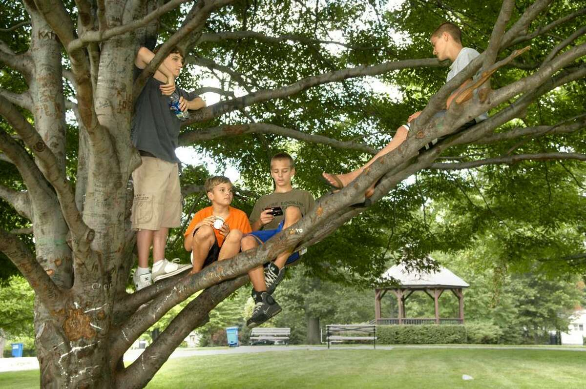 Kids hang out in a tree at Ballard Park in Ridgefield August 18, 2009 Left to right, Richard Soyak, 15 of New Milford, brothers Tim,10 and Johnny Dumke, 14 and Kevin Barird, 14, all of Ridgefield.