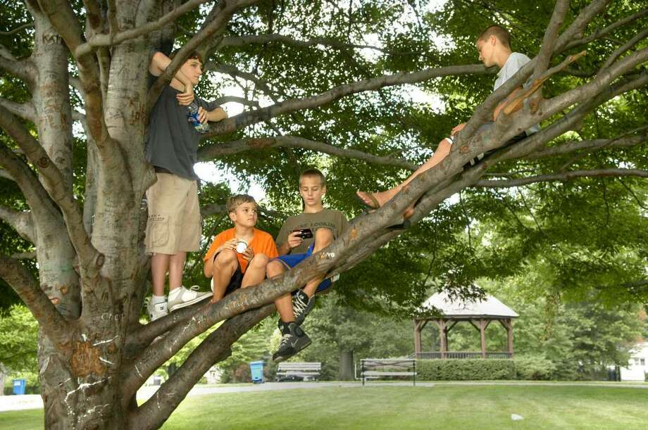 Kids hang out in a tree at Ballard Park in Ridgefield August 18, 2009 Left to right, Richard Soyak, 15 of New Milford, brothers Tim,10 and Johnny Dumke, 14 and Kevin Barird, 14, all of Ridgefield. Photo: Carol Kaliff / The News-Times