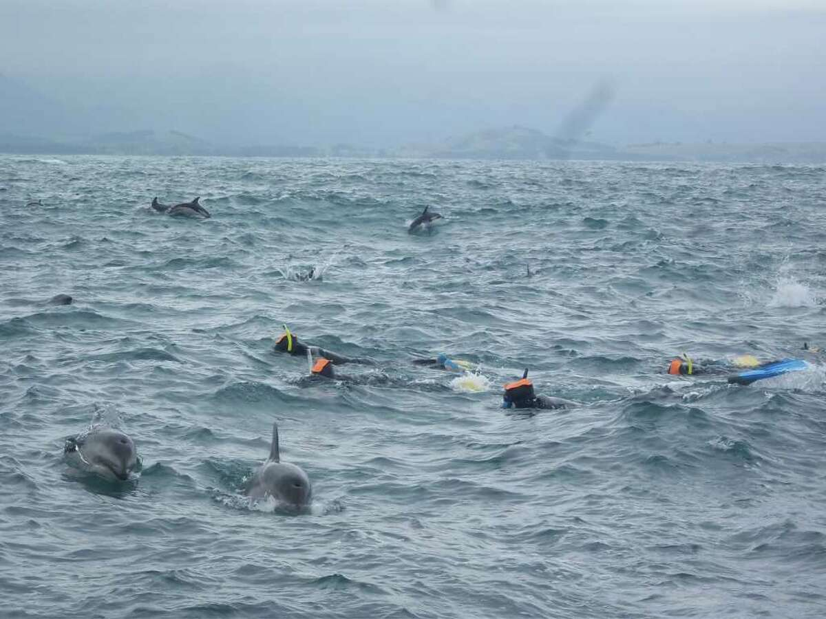 Laura Von Rosk with yellow snorkel tube - swimming with dolphins in New Zealand (Photo by Laura Von Rosk)