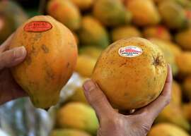 Marion Nestle compares papayas at Monterey Market in Berkeley in 2006.