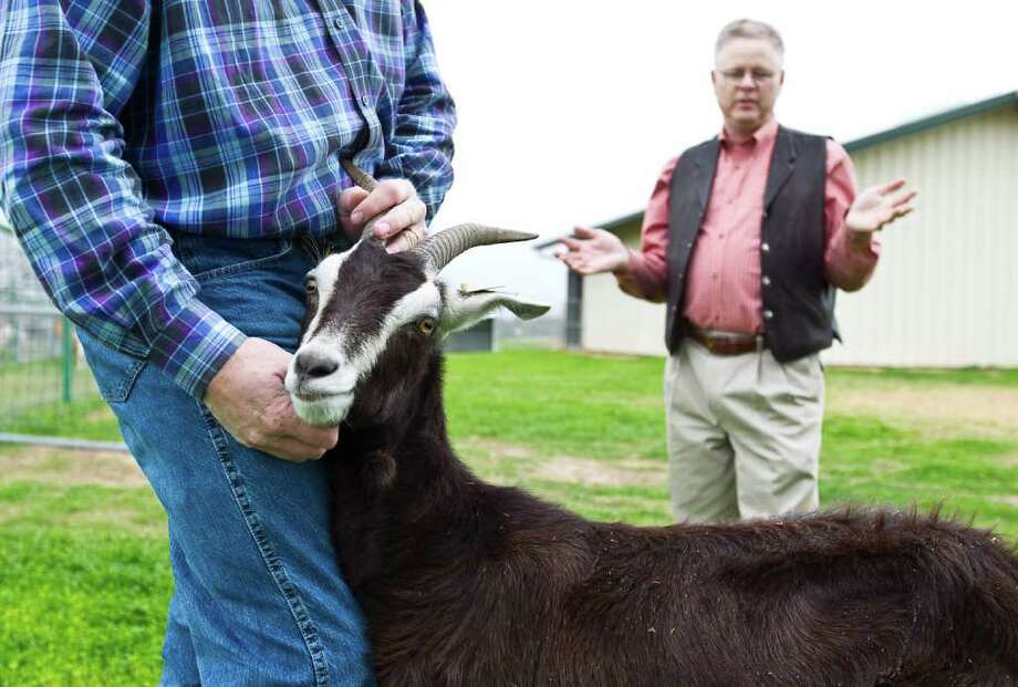 Texas A&M researcher Charles R. Long, left, holds a female goat that is genetically modified to produce a malaria vaccine in it's milk as fellow researcher Mark Westhusin, right,  talks about her at the The Reproductive Sciences Complex Tuesday, Jan. 24, 2012, in College Station.The goat is pregnant and they are hoping that the vaccine  could be a life-saver in poor countries. Photo: Karen Warren, Houston Chronicle / 2012  Houston Chronicle