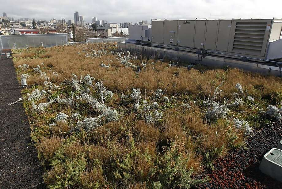 A rooftop garden grows on the new addition to the Drew School in San Francisco, Calif. on Friday, Feb. 10, 2012, which opened recently after a long appeals process. Photo: Paul Chinn, The Chronicle