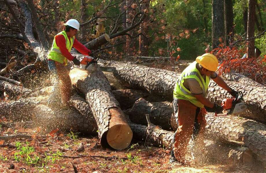Tree removal efforts continue around The Woodlands. Last year, The Woodlands Township removed more than 9,000 trees and several hundred more have been marked for removal this year. Photo: Cody Duty / © 2011 Houston Chronicle
