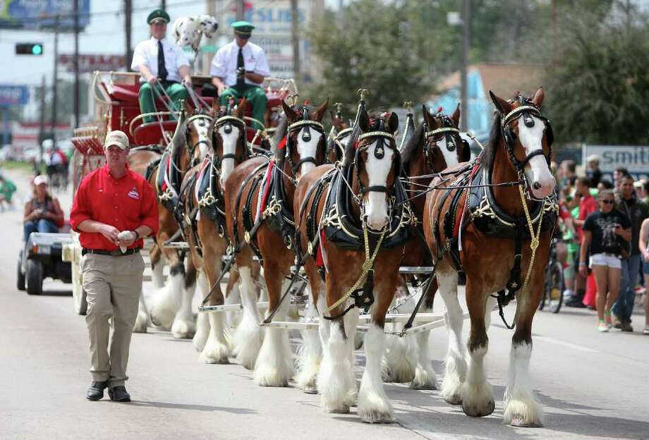 The Budweiser Clydesdales participated in the 33rd Annual St. Patrick's Day 1960 Parade in 2011. Photo: Thomas Nguyen / Freelance