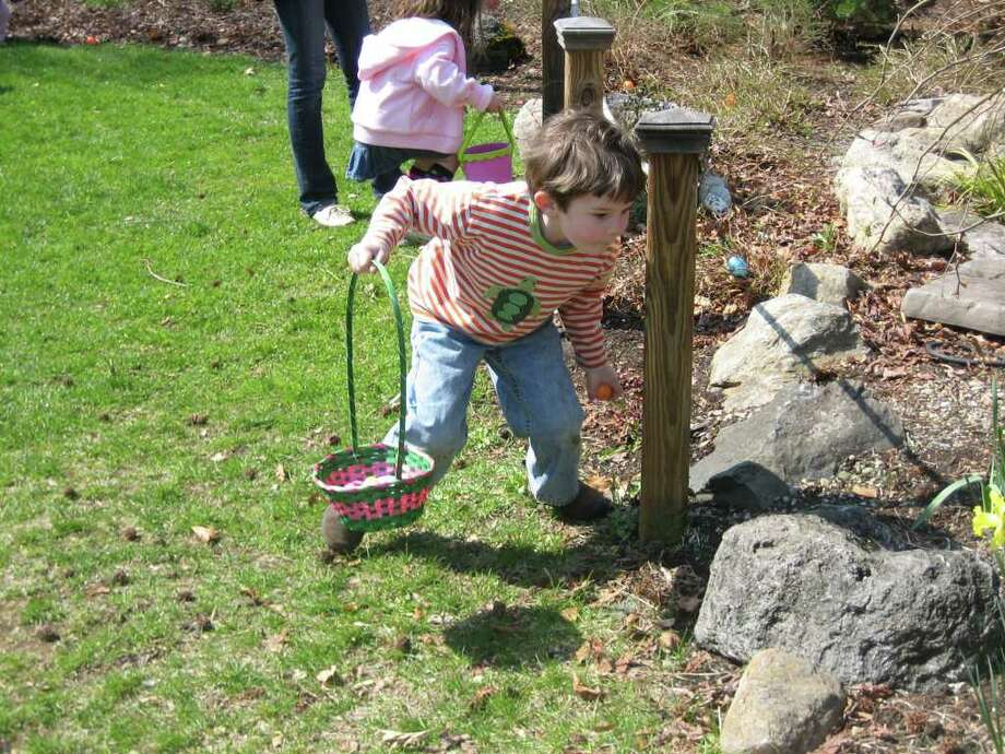 Wilson Crowley searches for eggs at last year's New Canaan Nature Center Egg Hunt. Photo: Contributed Photo