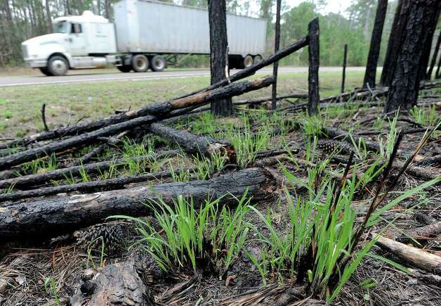 To reduce threats of fire and aid in the growth of trees, Jasper county uses controlled burns along the highways. Last year's drought caused low water levels on the lakes and several wildfires.  Photo taken Thursday March 2, 2012 Guiseppe Barranco/The Enterprise Photo: Guiseppe Barranco, STAFF PHOTOGRAPHER / The Beaumont Enterprise