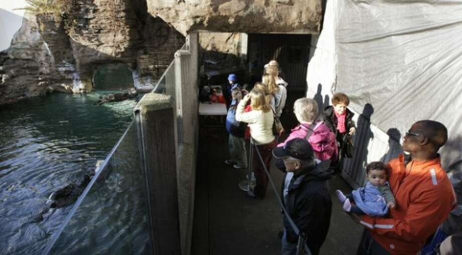People at the Seattle Aquarium watch as sea otter Aniak, upper left, swims with her yet-to-be named daughter, along with Aniak's mother, Lootas, lower left, Thursday, Jan. 26, 2012, in Seattle. The baby was born on Jan. 14, 2012 and will be named in February, after the public votes on a selection of names prepared by the Aquarium staff. (Ted S. Warren)
