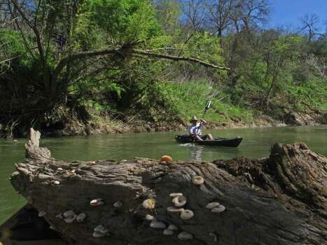 With a mushroom-encrusted log in the foreground, Zane Goodspeed explores the San Antonio River on the newly opened Saspamco Paddling Trail. Photo: John Goodspeed / For The Express-News
