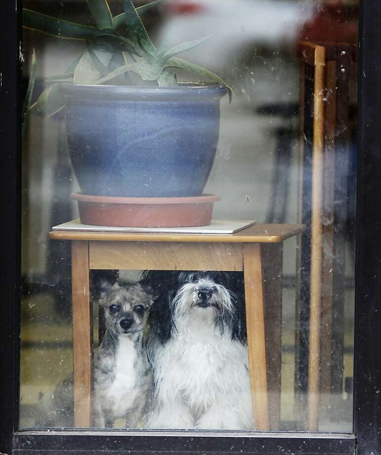 Still worried about the tornadoes: Angel (left) and Buddy take cover under an end table at a pet grooming shop in Lafayette, Ind. Photo: Michael Heinz, Associated Press