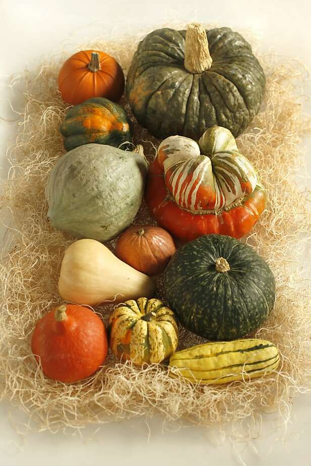 Various squash of the season, clockwise from upper right: Jarradale, Turban, Kabocha, Delicata, Sweet Dumpling, Red Kuri, Butternut, Munchkin, Blue Hubbard, Acorn, Sugar Pie, in San Francisco, Calif., on November 5, 2008. Photo: Craig Lee, The Chronicle