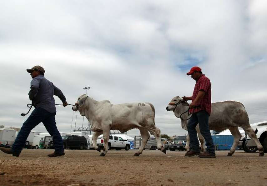 Under partly cloudy skies, Joe Vega, left, and Victor Veliz, from RB Ranch in Laredo, walk in two of