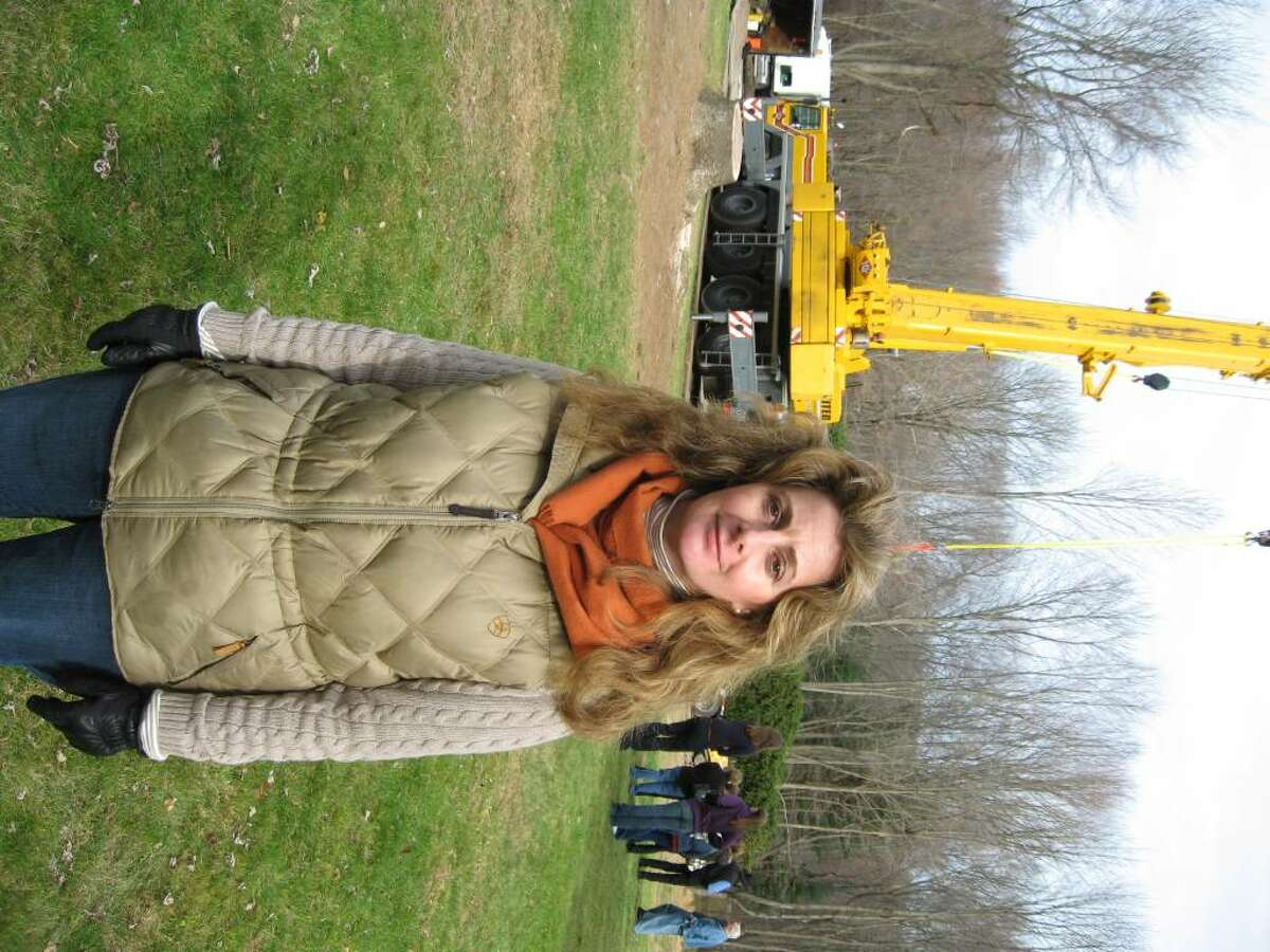Maria Corti sent in a picture of the huge Norway spruce tree in her Easton yard to in hopes they would choose it to be the 2009 Rockerfeller Center Chrsitmas Tree in New York City.