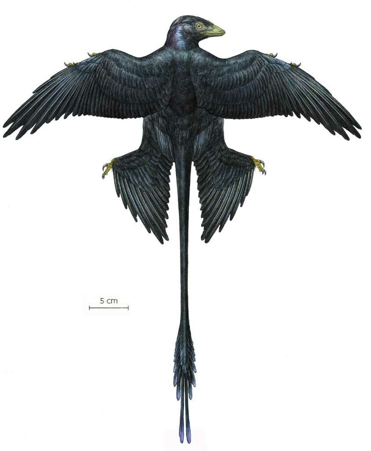 The microraptor was a four-winged dinosaur that lived some 130 million years ago in what's now the northeastern part of China.