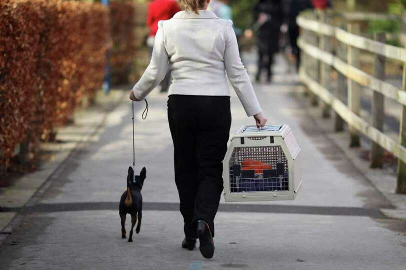 Dogs and their owners arrive on Day one of Crufts at the Birmingham NEC Arena on March 8, 2012 in Bi
