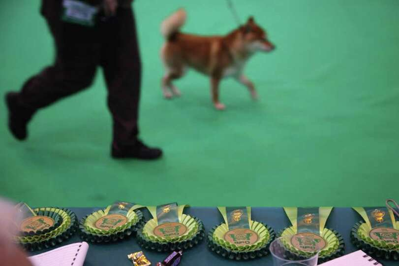 Rosettes are displayed on a table as dogs and their owners attend Day one of Crufts at the Birmingha