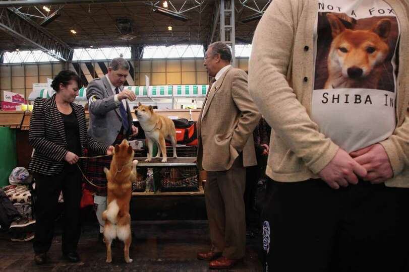 Dogs and their owners attend Day one of Crufts at the Birmingham NEC Arena on March 8, 2012 in Birmi