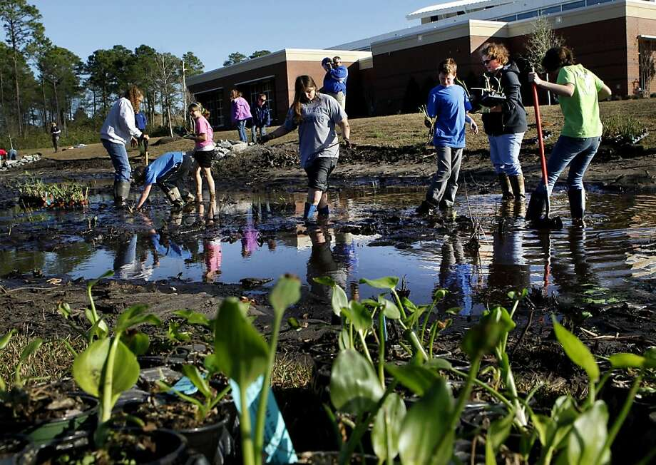 Members of the Waccamaw Watershed Academy at Coastal Carolina University,  are working with the Horry County Stormwater Management Department and Ocean Bay Middle School Science Club members to construct a stormwater wetland at the new Carolina Forest Recreation Center, near Myrtle Beach on Wednesday, March 7, 2012. The group began planting wetland plants this week. Stormwater wetlands are designed to remove and trap pollutants carried by storm runoff from rooftops, parking lots, and sidewalks. The aquatic and wetland plants help to process nutrients and filter water while attracting natural wildlife such as butterflies and birds. Treated water discharged from the stormwater wetland will be cleaner and have less impact on nearby natural waterways. The Science Club members recently prepared the area for planting by removing invasive cattails that would have crowded out the new plantings. Horry County's Infrastructure and Regulation Division views this project as a great way to demonstrate that constructed wetlands can be effective, attractive alternatives to conventional stormwater ponds. (AP Photo/The Sun News, Steve Jessmore) Photo: Steve Jessmore, Associated Press