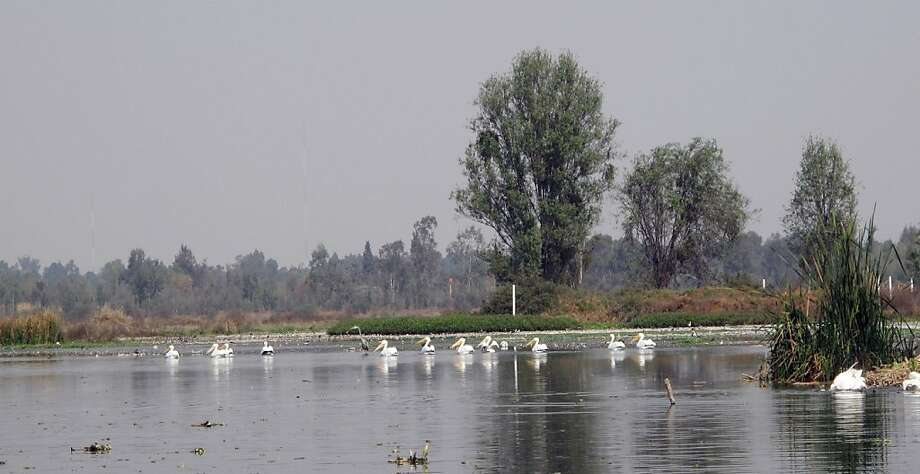 The once great floating gardens of Mexico City, called Xochimilco, are dying, their canals overwhelmed by foreign fish. But bird watchers still come to look at the white pelicans, in one of the last big green spaces in a metropolis of 22 million. Photo: William Booth, The Washington Post