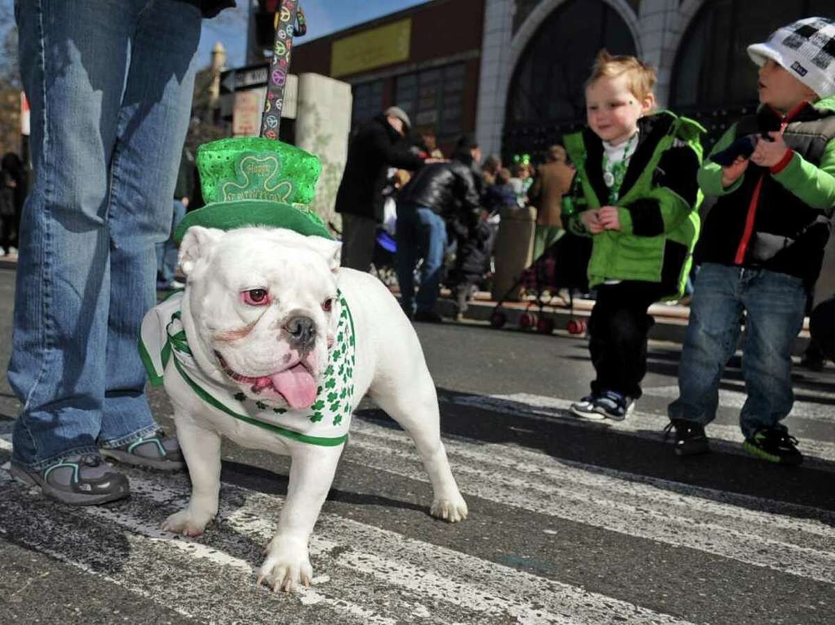 Love stands at the feet of her owner, Janet McClure of Rye, after Saturday's Saint Patrick's Day parade in Stamford on March 10, 2012.