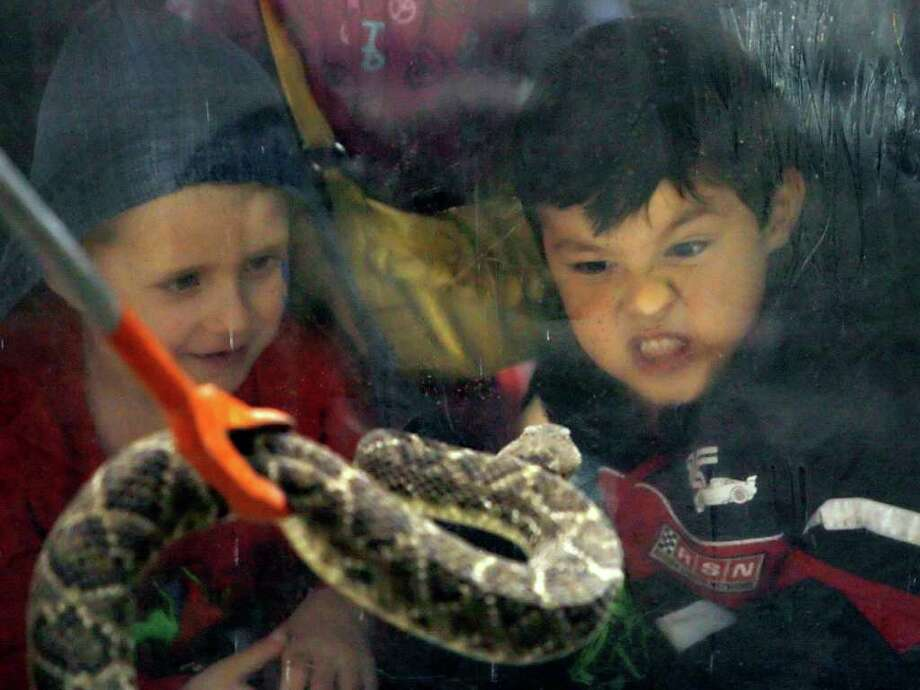 Joseph Castro, 5, right, of Sweetwater, challenges a rattlesnake during the 54th annual Rattlesnake Roundup at Nolan County Coliseum in Sweetwater, Texas on Saturday, March 10, 2012. The Sweetwater Rattlesnake Roundup is the world's largest and takes place every second weekend in March. Photo: Michael Miller, San Antonio Express-News / © 2012 San Antonio Express-News