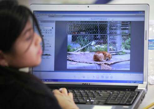 Jovana Espinoza (left) works on a picture of a dog found in the neighborhood around Edgewood for a Girl Scout project. Girl Scouts take photos on the West Side to document what makes it easy or hard to be physically active in their community, Monday, March 15, 2010. Photo: BOB OWEN, Express-News File Photo / rowen@express-news.net