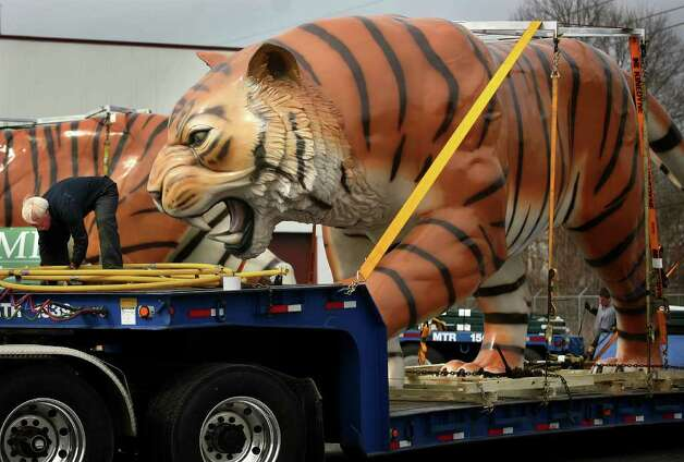 Truck driver Dick Miller, left, doesn't seem concerned about the giant tiger within striking distance as he makes last minute preparations to ship one of a pair of enormous tigers from Show Motion, Inc. in Milford to Detroit on Tuesday, March 13, 2012. The tigers, built of fiberglass over an internal steel frame, were refurbished are are being sent back to their home atop the scoreboard at Comerica Park, home of the Detroit Tigers baseball team. Photo: Brian A. Pounds / Connecticut Post