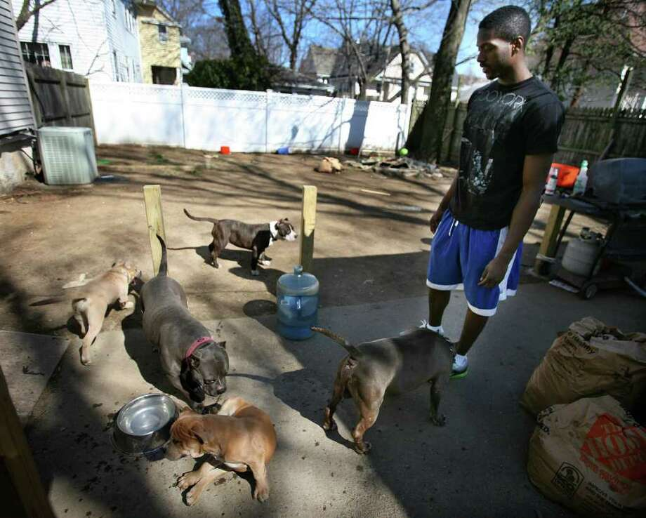 Omari Howard, 21, a senior at the University of Bridgeport, with five of his seven pitbulls in the back yard of his Bridgeport home on Wednesday, March 14, 2012. Photo: Brian A. Pounds / Connecticut Post