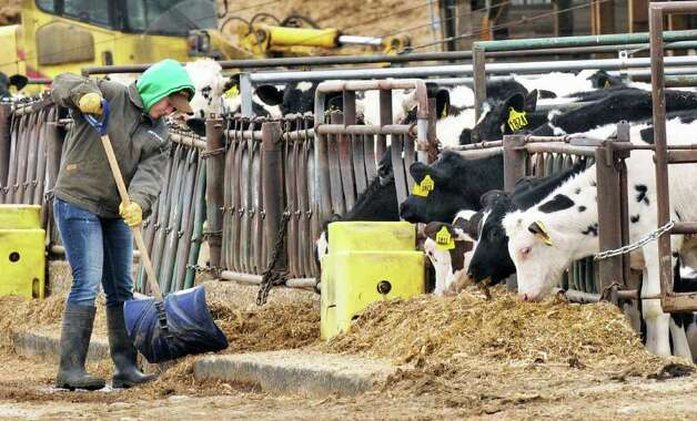 Hucow Dairy Farm