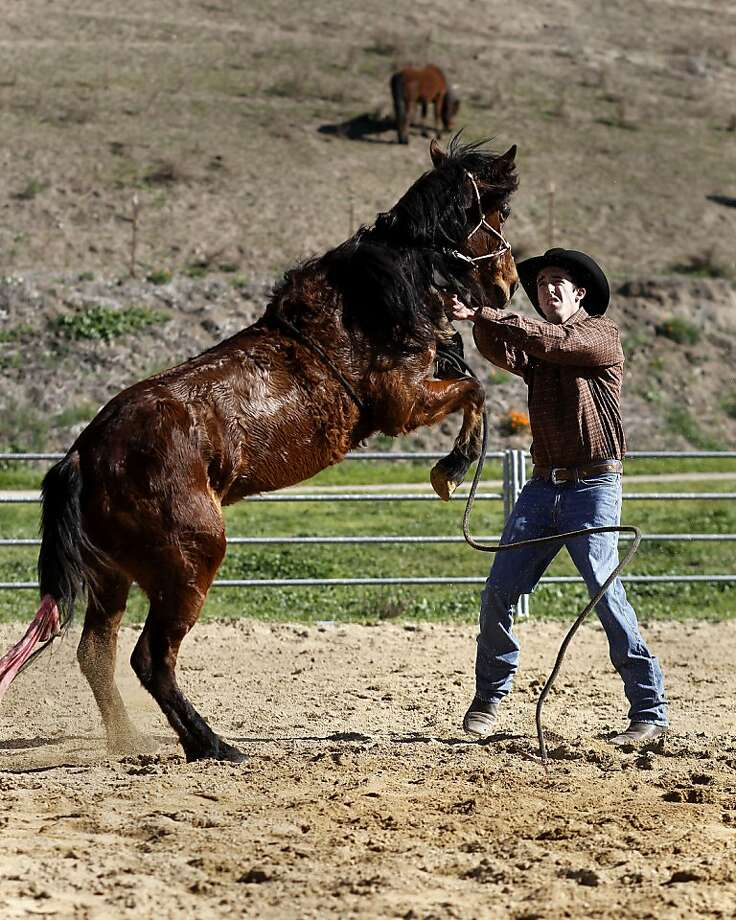 "Justin Mott trains his mustang, ""Syringa"" in Sunol, Ca., on Thursday Feb. 23 2012. Mott, a horse trainer, has been selected to compete in the Extreme Mustang Makeover, which will be presented in Norco, Ca. this May. Competitors have 90 days to train a wild mustang which has been saved by the US Government. Photo: Michael Macor, SFC"