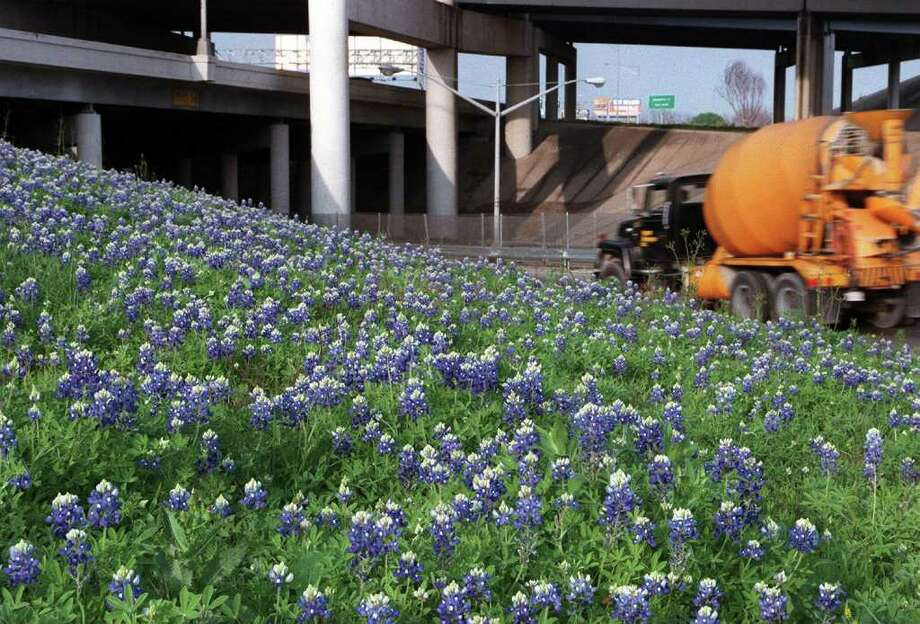 A patch of bluebonnets blooms on a hill alongside of Interstate 10 East near the I-37 North exit on March 5, 1998. Photo: CHARLES BARKSDALE, Express-News File Photo