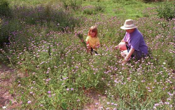 Shawna Irwin, 7, and her grandmother Katherine McDaniel pick wildflowers in the Dreamland Oaks subdivision. Photo: ROBERT McLEROY, Express-News File Photo
