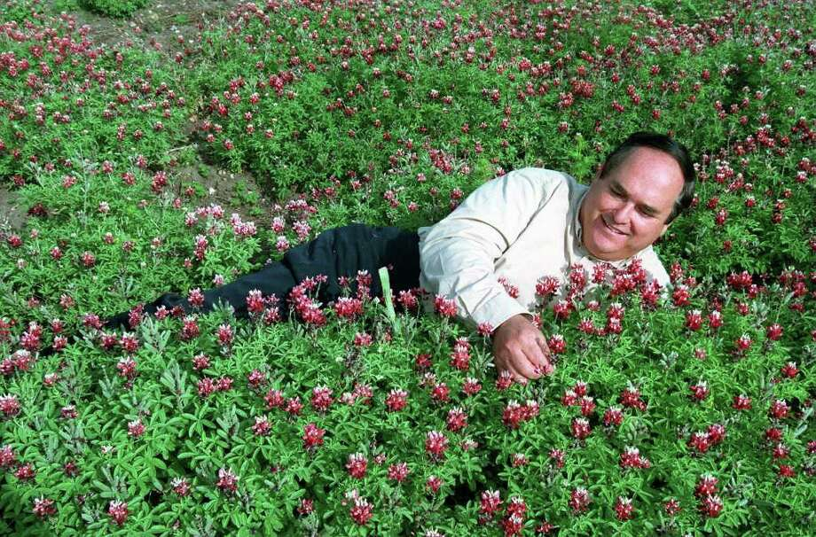 Jerry Parsons checks out some maroon bluebonnets on April 7, 1998. Photo: ROBERT McLEROY, Express-News File Photo