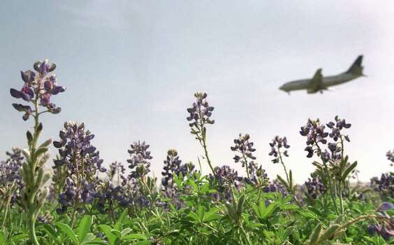 Bluebonnets bloom along U.S. 281 North near the San Antonio International Airport on March 15, 1999. Photo: ROBERT MCLEROY, Express-News File Photo