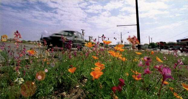 Wildflowers are in full bloom along Harry Wurzbach and Rittiman Road on Feb. 29, 2000. Photo: CHARLES BARKSDALE, Express-News File Photo / CHARLES BARKSDALE photo