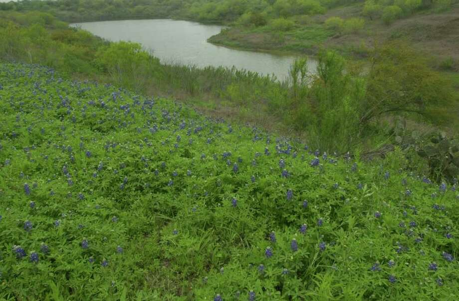 Bluebonnets and huisache trees bloom around the lake at Lago Vista subdivision on March 28, 2001. Photo: JERRY LARA, Express-News File Photo / EN